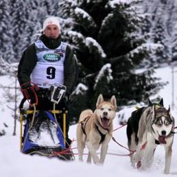 Kennel Husky Heart – Sibirien Huskies