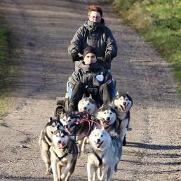 Kennel Pawfections – Sibirien Huskies